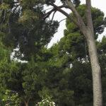Cinco árboles singulares de Madrid que tienes que conocer