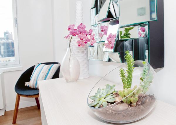 cactus decora