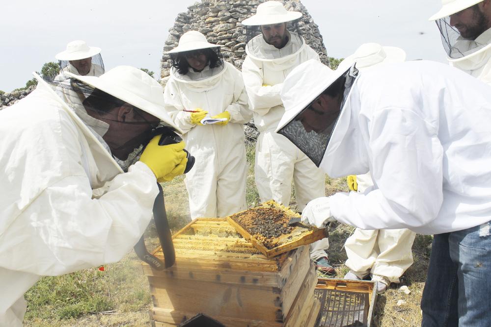 Las granjas de apicultura pueden ser visitadas por los turistas.