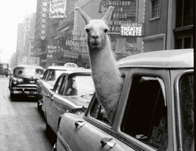 La Fundación Canal descubre los secretos tras las imágenes más icónicas de Magnum Photos