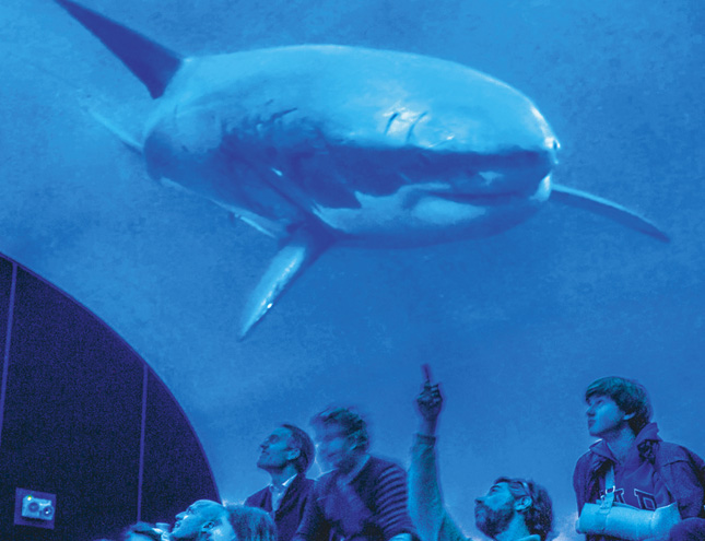 """El museo de Ciencias Naturales propone """"Envolverse"""" en el océano para despertar conciencias"""