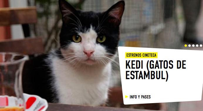 gatos - Propuestas de ocio para Madrid (10 al 16 de enero)
