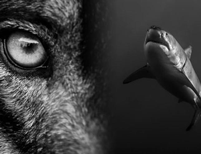 Lobos y tiburones. Presas de nuestro miedo, en el MNCNM
