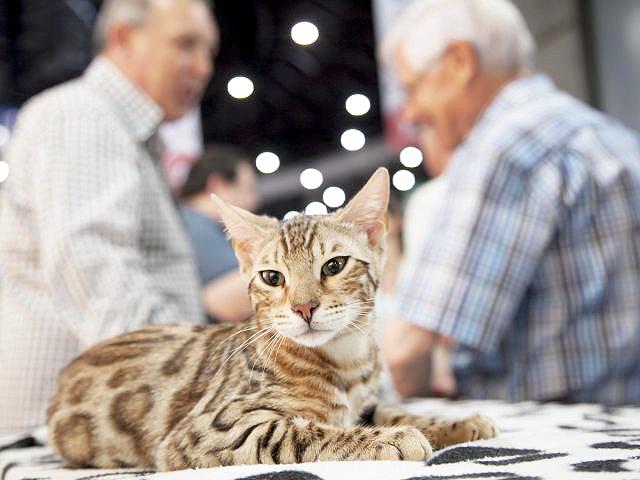 phoca thumb l 2017 05 27 25593 - La feria de las mascotas promueve la adopción