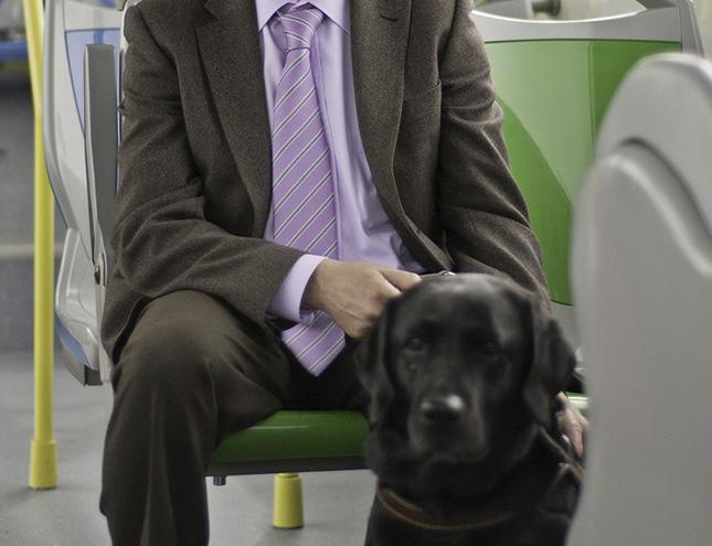 El nuevo reglamento de la EMT permitirá subir al autobus con perros y patinetes