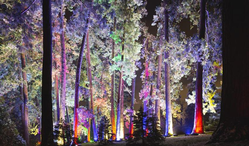 Luces de colores y hadas te invitan a un paseo por el Jardín Botánico