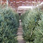 No tires tu árbol de Navidad