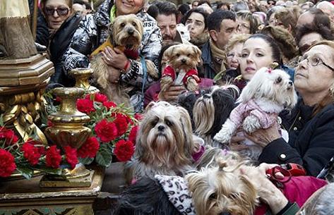 fiestas de san anton 1 - Fiestas de San Antón 2020. Programa completo