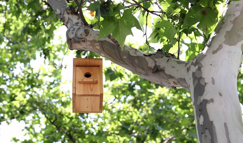 Madrid ya suma 1000 cajas nido en sus parques