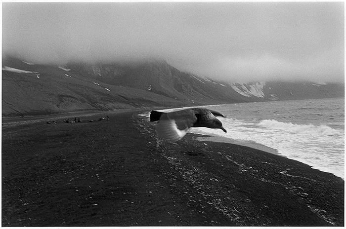 antartida negra - Exposiciones de fotografía: La Antártida y Cuba, dos viajes en blanco y negro