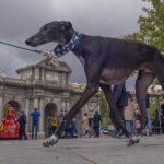 Javier Aranburu, el fotógrafo seducido por Madrid