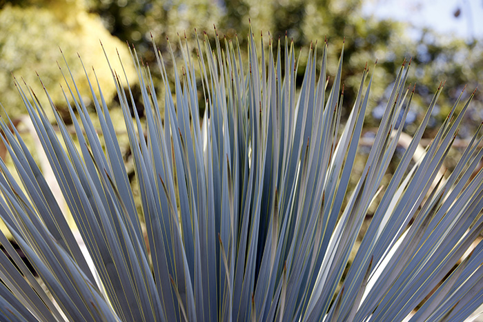 Jardín Botánico de Madrid 010 - Un paseo en 15 fotos por el Jardín Botánico de Madrid