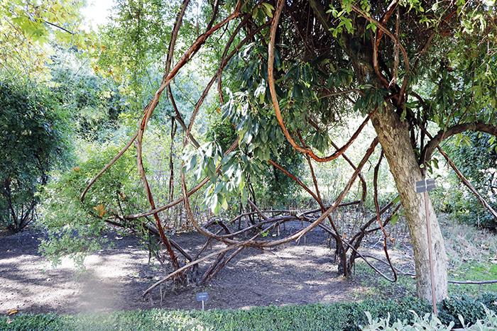 Jardín Botánico de Madrid 03 - Un paseo en 15 fotos por el Jardín Botánico de Madrid