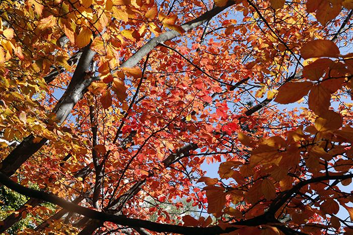 Jardín Botánico de Madrid 05 - Un paseo en 15 fotos por el Jardín Botánico de Madrid