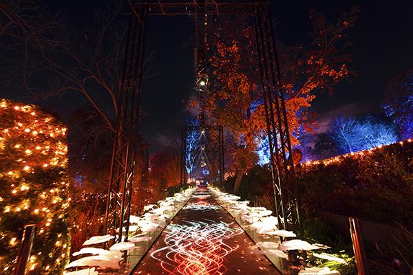 Jardín Botánico de Madrid Naturaleza Encendida 03 - El Jardín Botánico de Madrid ofrece un espectáculo de luces para celebrar sus 265 años