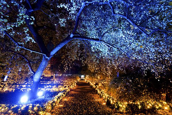 Jardín Botánico de Madrid Naturaleza Encendida 04 - El Jardín Botánico de Madrid ofrece un espectáculo de luces para celebrar sus 265 años