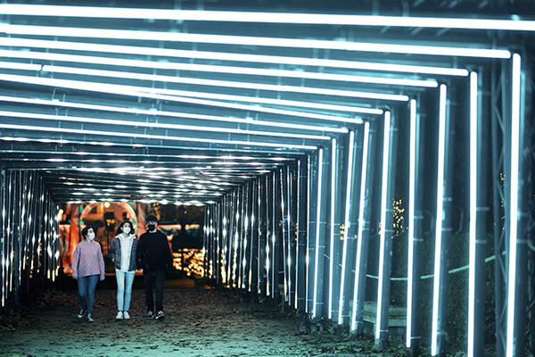 Jardín Botánico de Madrid Naturaleza Encendida 06 - El Jardín Botánico de Madrid ofrece un espectáculo de luces para celebrar sus 265 años