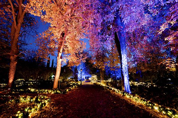 Jardín Botánico de Madrid Naturaleza Encendida 07 - El Jardín Botánico de Madrid ofrece un espectáculo de luces para celebrar sus 265 años