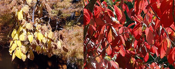 allo rojo Jardín Botánico de Madrid - Un paseo en 15 fotos por el Jardín Botánico de Madrid