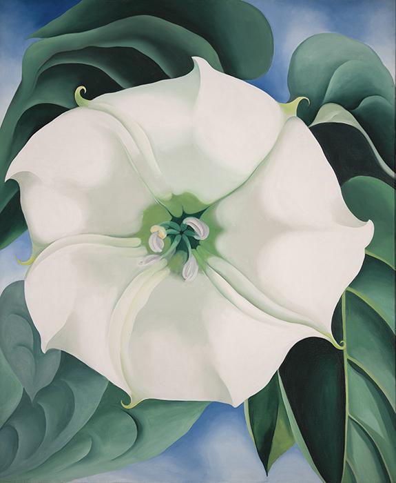 estramonio flor blanca 1 - O´Keeffe, la pintora más valorada de Estados Unidos, expone en el Thyssen