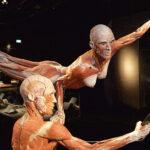 Cuerpos humanos «plastinados» se exponen en Madrid